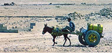 A donkey pulling a water cart south of Doha, March 1972